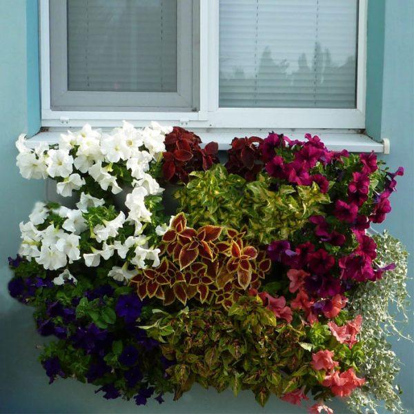 """Вазон цветочный для вертикального озеленения Живая стена """"Цвеона 24"""""""